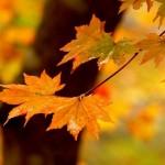 蒜山高原など岡山の紅葉スポット!見ごろ時期は?観光・宿泊温泉情報