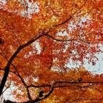 小石川後楽園・六義園の紅葉スポット!紅葉の見ごろ時期は?