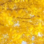 芦ノ湖(箱根)の紅葉スポット!見ごろ時期は?観光・温泉宿泊情報