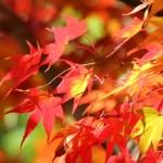 秋川渓谷や奥多摩湖など紅葉時期は? レジャーも楽しめる観光スポット