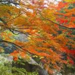 広島の紅葉スポット!紅葉の見ごろ時期はいつ?観光・温泉宿泊情報