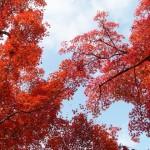 山形の紅葉スポット!紅葉の見ごろ時期はいつ?観光・温泉宿泊情報
