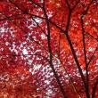 紅葉i-1