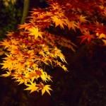 紅葉とダム 広島のダムと紅葉時期はいつ?見どころの紅葉スポットとダム周辺