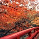 神庭の滝・天神峡・宇甘渓など岡山の紅葉スポット!見ごろ時期はいつ?