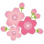 折り紙 桜 折り方-立体的な作り方 5枚の桜の器 桜飾りを手作り
