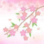 高齢者 春の工作レクリエーション 施設の壁面飾り作り方 桜手作り