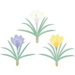 折り紙 クロッカス 折り方 簡単~本格的なクロッカスの花の作り方