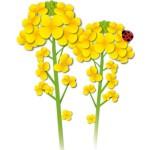 折り紙 菜の花 折り方 簡単な花の作り方 冬~春の壁面飾り製作に