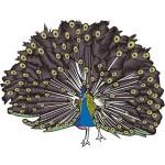 折り紙 孔雀 折り方 簡単な作り方 くじゃくの羽根模様や形状別