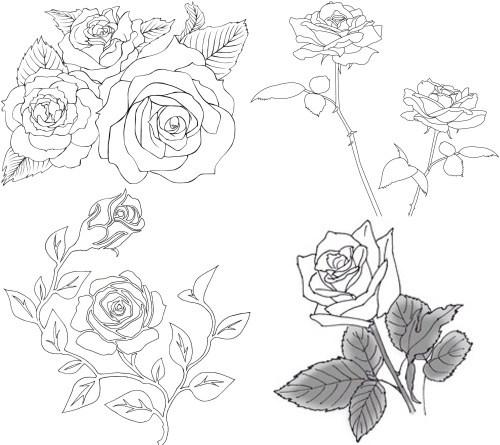 rose 6 nurie