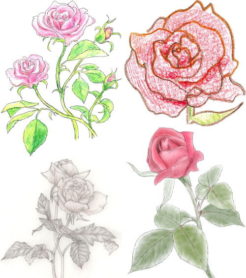 rose 8 kakikata