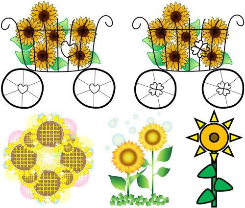 sunflower 1 oshare