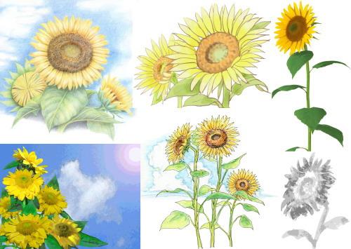ひまわり イラスト 手書き風 無料素材サンプル. sunflower 3 tegaki