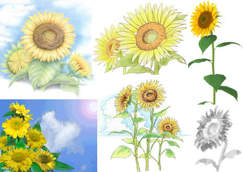 sunflower 3 tegaki